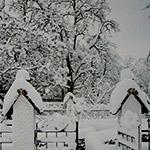 Gartenkalender Januar 2009